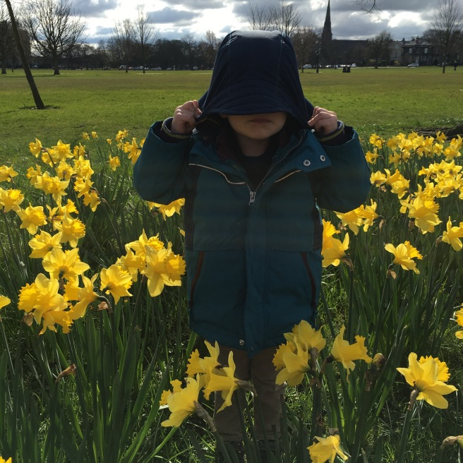 Harrogate Mama - Joseph hiding in the daffodils.jpg